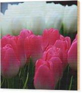 Tulip 7 Wood Print