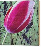 Tulip Against Green Wall Wood Print