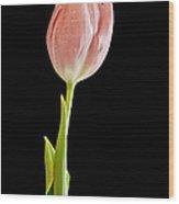 Tulip Beauty Wood Print