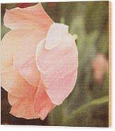 Tulip Blush Wood Print
