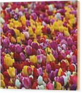 Tulip Bud Farm Portrait Wood Print