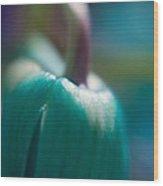 Tulip Bud Wood Print