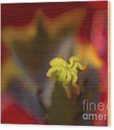 Tulip Center Wood Print