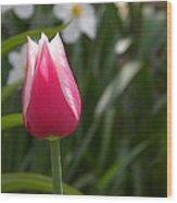 Tulip Wood Print by Cim Paddock