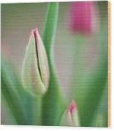 Tulip Curves And Blooms Wood Print