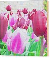 Tulip Delight Wood Print