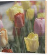 Tulip Display Wood Print