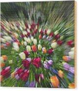 Tulip Explosion Wood Print