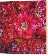 Tulip Festival - 21 Wood Print