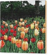 Tulip Festival  Wood Print by Zinvolle Art