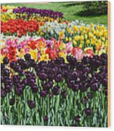 Tulip Field 1 Wood Print