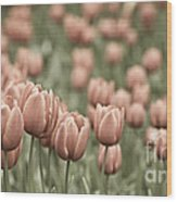 Tulip Field Wood Print by Frank Tschakert