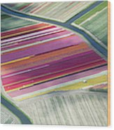 Tulip Fields, Aerial View, South Wood Print
