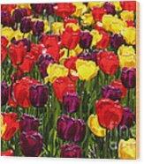 Tulip Fields Wood Print