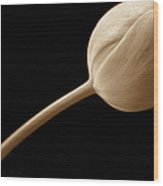Tulip Flower Abstract Sepia Wood Print