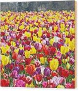 Tulip Flower Festival Art Prints Spring Wood Print