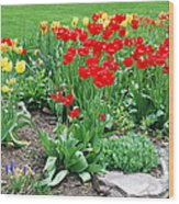 Tulip Gardenscape Wood Print