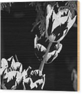 Tulip Group In Black And White Wood Print