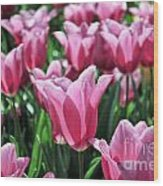Tulip Heaven Wood Print