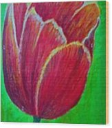 Tulip In Bloom Wood Print by Kat Poon