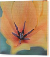 Tulip In Orange Wood Print