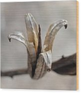 Tulip Like Seed Pod Wood Print
