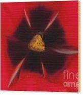 Tulip Macro 1 Wood Print