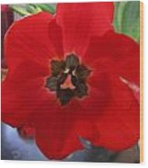 Tulip Mania 20 Wood Print