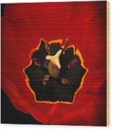 Tulip On Black Wood Print