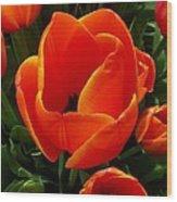 Tulip Orange Flower Wood Print