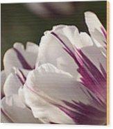 Tulip Pair Wood Print