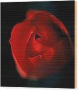 Tulip Pucker Wood Print
