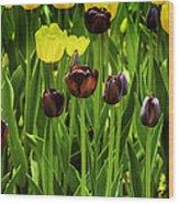 Tulip Race Time Wood Print