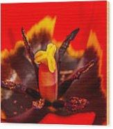 Tulip Stamp Wood Print