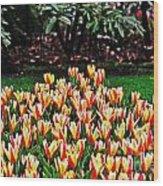 Tulip Stripe Garden Wood Print
