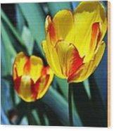 Tulip Sun Burst Wood Print