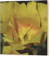 Tulip Time Hopeless Love Wood Print