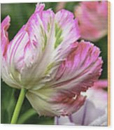Tulip Time Pink And White Wood Print
