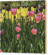 Tulip Time Pink Yellow Black Beauty Wood Print