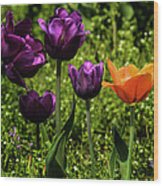 Tulip Time Purple And Orange Wood Print