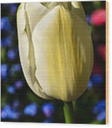 Tulip Time Wood Print