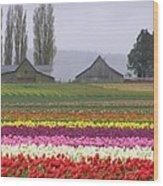 Tulip Town Barns Wood Print