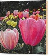 Tulip Trail Wood Print