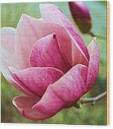 Tulip Tree In Bloom Wood Print