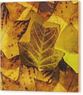 Tulip Tree Leaves In Autumn Wood Print