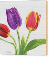 Tulip Trio Wood Print by Sarah Batalka