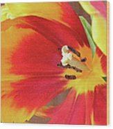 Tulip Warm Tones Wood Print