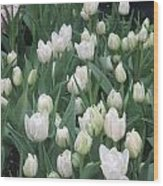 Tulip White Show Flower Butterfly Garden Wood Print