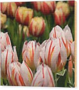 Tulips 31 Wood Print