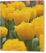 Tulips 29 Wood Print